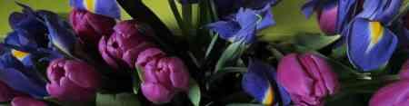 Tulipes printemps-3