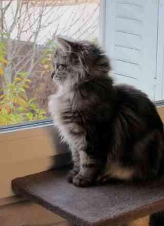 le-chat-regarde2-version-blog